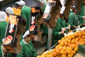 Naranjas Torres RSC - trabajadores 01